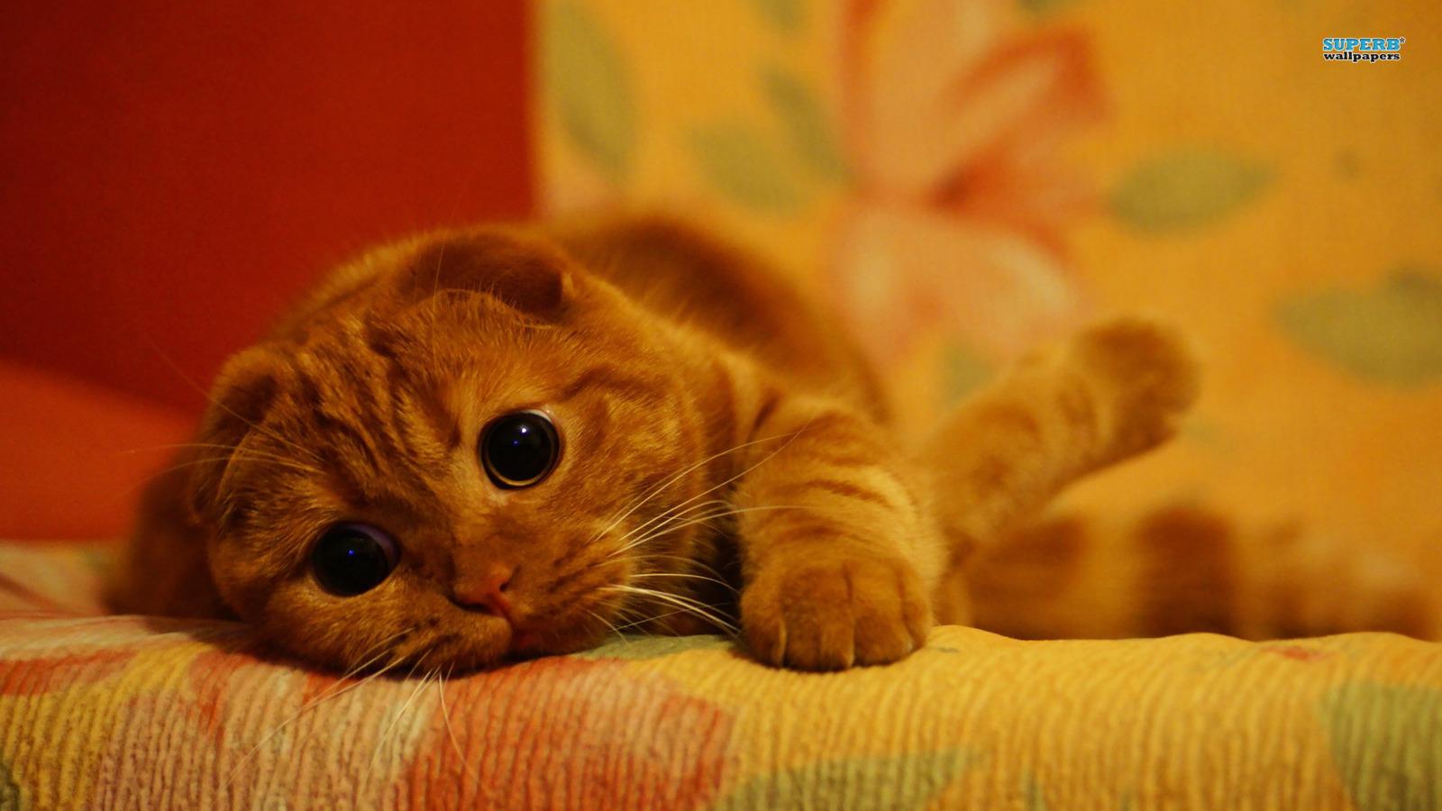 壁纸 动物 猫 猫咪 小猫 桌面 1600_900