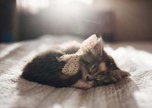 Kitten-cats-38771102-300-214.jpg