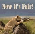 Now it's fair!!!!! - lions photo