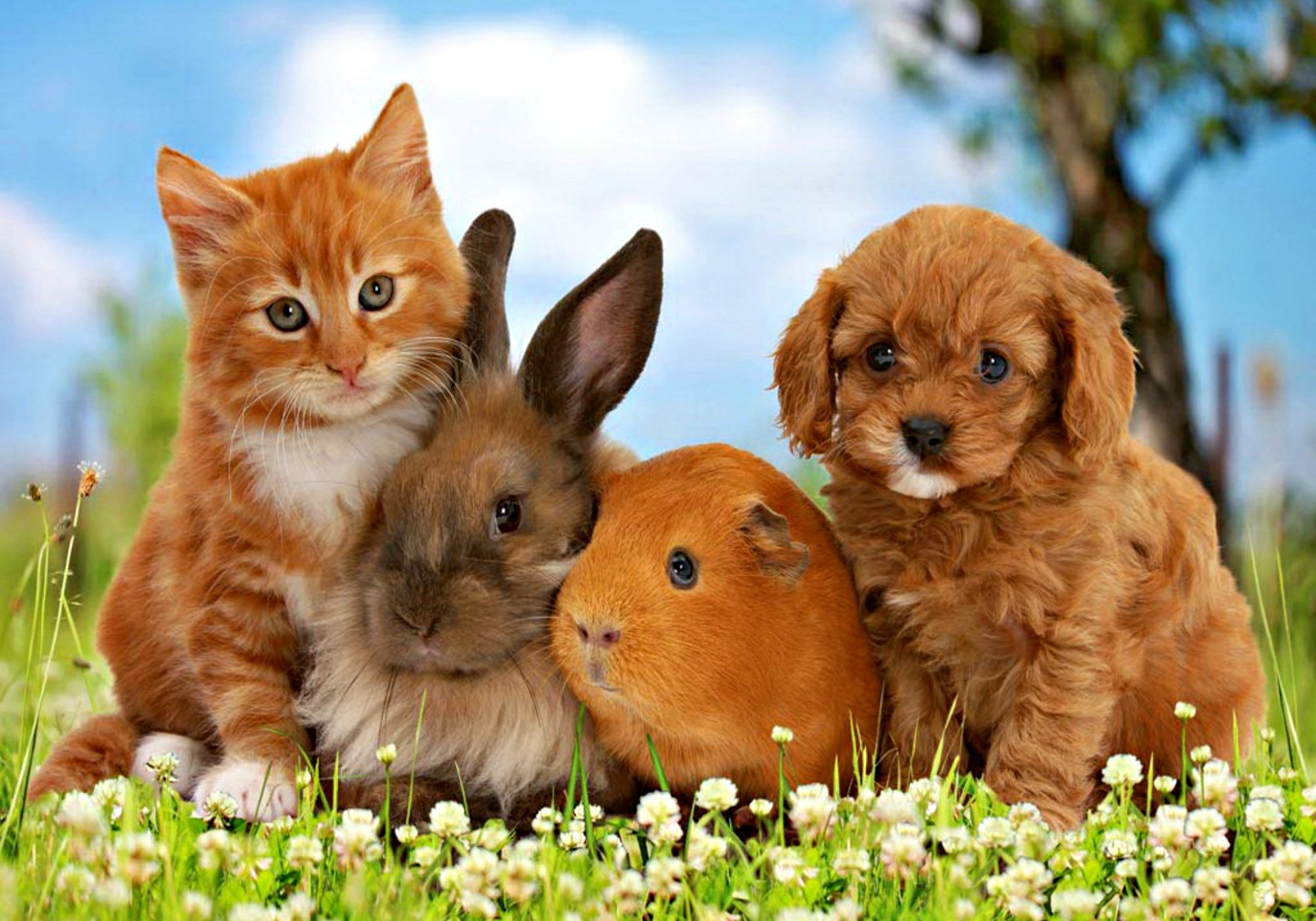 Dogs Cats And Bunnies