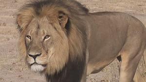 R.I.P Cecil