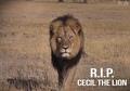 R.I.P,Cecil - lions photo