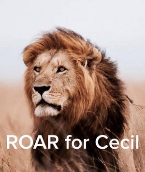 Roar for Cecil