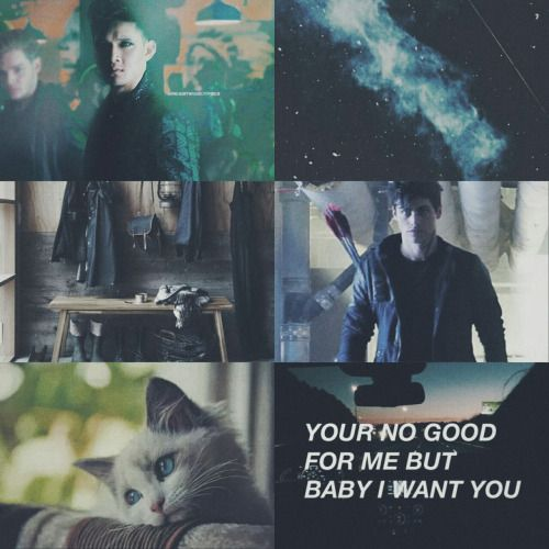 Alec & Magnus 壁紙 possibly with a sign, a cat, and a tom titled Shadowhunters - Malec