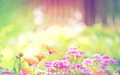 Summer Meadow - daydreaming wallpaper