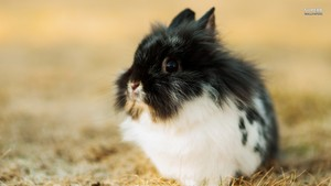 Sweet Rabbit