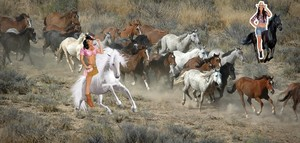 Two cowgirls rounding up a herd of wild horses