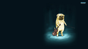 Violinist Dog