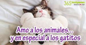 amo a los animales gatito