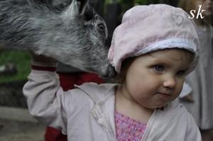 binatang children cinta