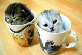 cup...cats...^^