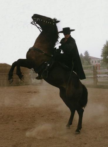 Alain Delon kertas dinding with a horse wrangler, a horse trail, and a lippizan called ed0807a18d7a4361142045c6d151a31b