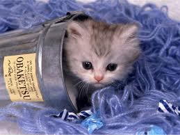 jar cat. :))