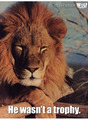 remembering Cecil - lions photo