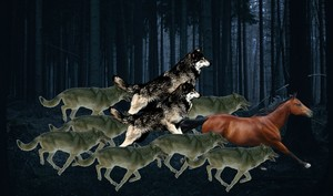 the pack of 늑대 hunted down an horse