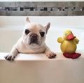 Barkley Sir Charles - dogs photo