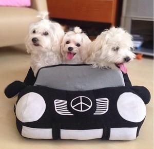 Cute Hunde