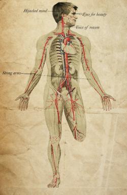 The Anatomy of Peeta Mellark