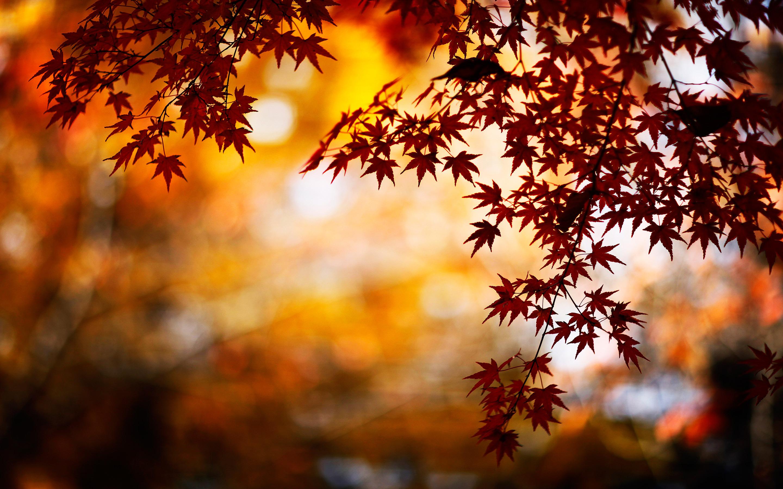 Autumn of my Dreams