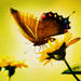 Butterfly with Flowers - butterflies icon