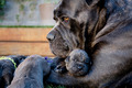 Dog And Her Puppies        - dogs photo