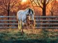 Horses  - horses fan art
