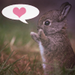 Lovebunny - bunny-rabbits icon