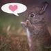Lovebunny - bunny-rabbits icon