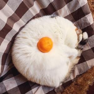 Sleeping Kitty
