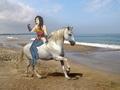 Wonder Woman on her Beautiful White Steed - wonder-woman fan art