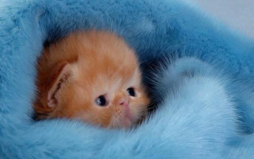 Cute Kittens Wallpaper Entitled Baby Kitten