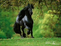 horse wallpaper kuda 15704792