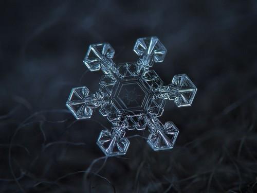 snow پیپر وال entitled snow crystal
