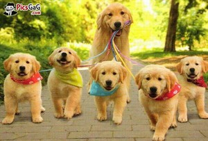 A family of dogs