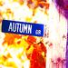 Autumn Icon - banner-and-icon-making icon