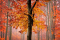 Autumn is here - autumn photo