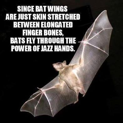 Halloween wallpaper called Bats