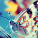 Blue tinted butterfly - butterflies icon