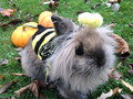 Bunny Rabbit - bunny-rabbits photo