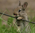 Bunny Rabbits - bunny-rabbits photo