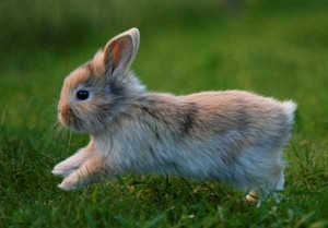 Arnab Bunny