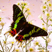 Butterfly among flowers - butterflies icon