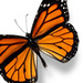 Butterfly - butterflies icon