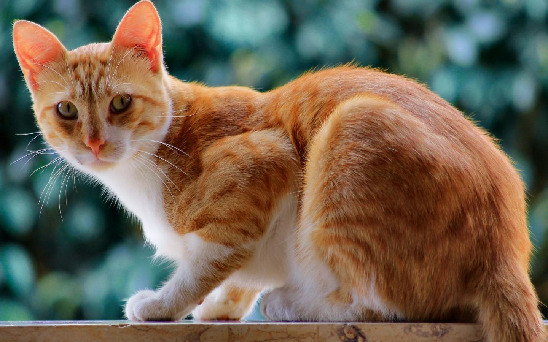 壁纸 动物 狗 狗狗 猫 猫咪 小猫 桌面 1440_900