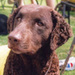 Curly the Dog - dogs icon