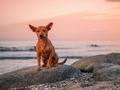 Dog - dogs photo