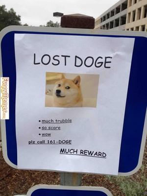 HELP! I lost MY DOGE!