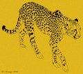 Leopard - drawing photo