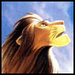 Lion King - the-lion-king icon