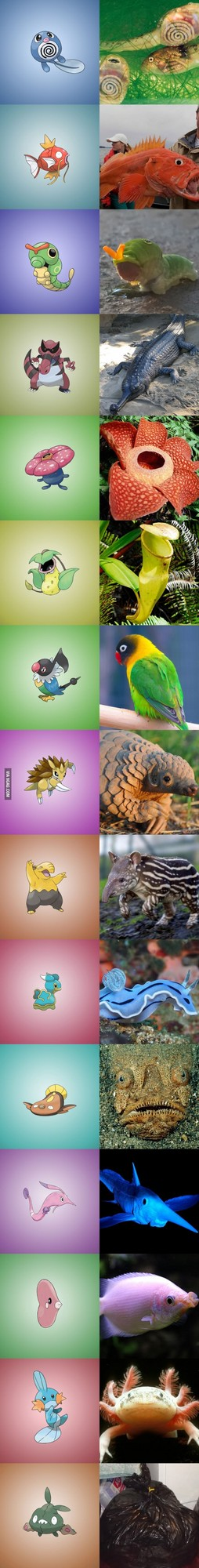pokemon real life